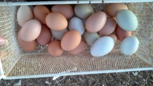 Let's not put all our eggs in one basket...even the pretty ones