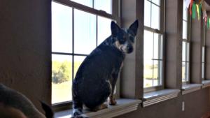 Dog in a Window