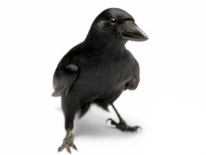 CAW! Let's celebrate all our wins!
