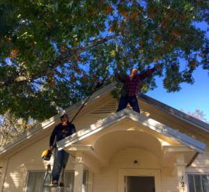 Contractors trimming trees