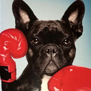 Boxer puppy with boxing gloves