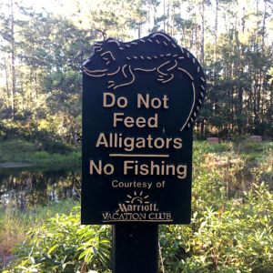 Never Feed the Alligators